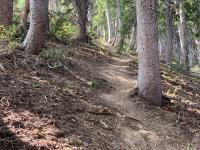 The trail is well-maintained, even on the steepest parts.